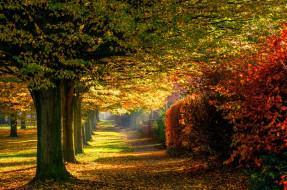 природа, парк, осень, листья, дорога, лес, деревья