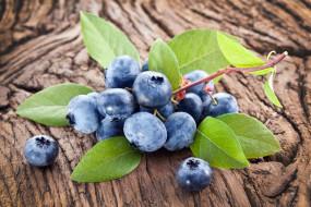 обои для рабочего стола 4707x3139 еда, голубика,  черника, blueberry, fresh, berries, wood, ягоды, черника