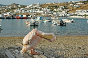 миконос греция, города, - улицы,  площади,  набережные, mykonos, залив, дома, greece