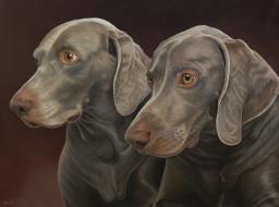 рисованные, животные, собаки