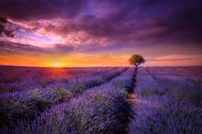 обои для рабочего стола 2048x1367 природа, поля, франция, прованс, поле, лаванда, цветы, сиреневые, дерево, солнце, закат