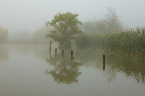 обои для рабочего стола 2048x1365 природа, реки, озера, туман, птица, утро, камыш, озеро