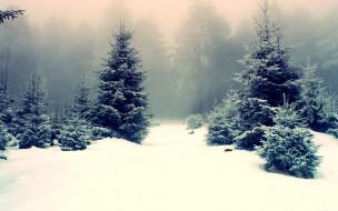 обои для рабочего стола 1920x1200 природа, зима, снег, туман, ёлки, лес