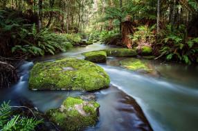 природа, реки, озера, лес
