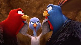 free birds, �����������, ������
