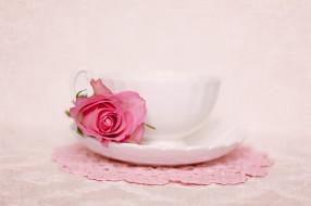 �����, ����, ������, flower, rose, still, life, ���������, ����