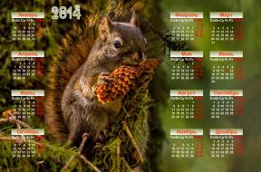 календари, животные, календарь, белка