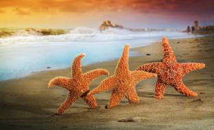 лето, песок, звезды, пляж, море