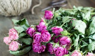 �����, ����, bud, rose, ��������, ������, ��������, �����, ����, blossoms, leaves, petals