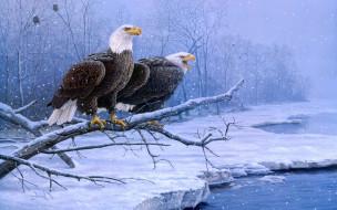рисованные, животные, орлы, ветки, снег