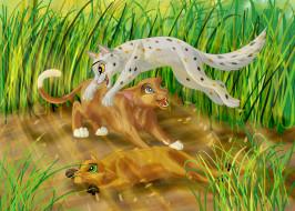 рисованное, животные, львы, семья, трава, игра, кошка