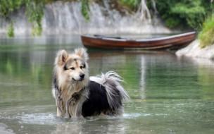 животные, собаки, природа, вода, река, лодка, собака