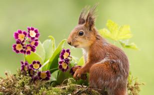 животные, белки, природа, белка, цветы