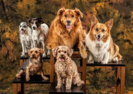 животные, собаки, друзья, фон