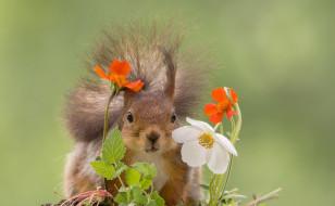 животные, белки, природа, цветы, белка