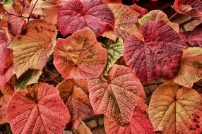 обои для рабочего стола 2048x1364 природа, листья, осень