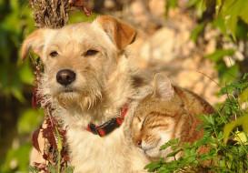животные, разные вместе, пирода, собака, солнечно, рыжий, кот, взгляд, коте, дружба
