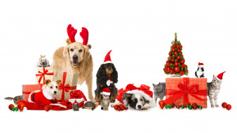 животные, разные вместе, подарки, елка, год, собаки, кошка, новый, шарики, шапка