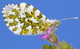 животные, бабочки,  мотыльки,  моли, крылья, насекомое, мотылек, бабочка, цветок, растение
