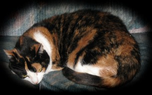 животные, коты, лежит, кот