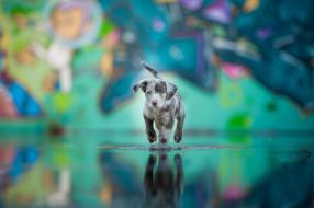 животные, собаки, вода, окрас, друг, собака, щенок