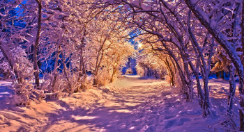 �������, ����, ����, ������, ������, ����, ���, �������, ������, beautiful, white, winter, nature, ����, road, forest, ������, lights, lanterns, park, bench, trees, path, sunset, snow, nice, cool