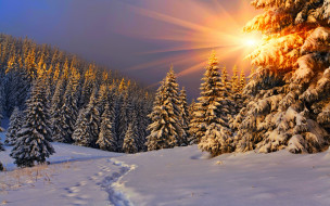 �������, ����, ����, ����, ������, nature, winter, sky, white, beautiful, forest, path, road, cool, nice, snow, sunset