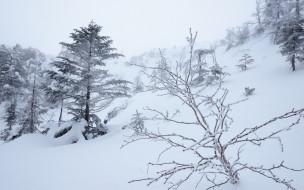 обои для рабочего стола 1920x1200 природа, зима, склон, деревья, снег, туман