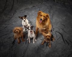животные, собаки, собачки