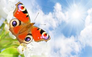 животные, бабочки,  мотыльки,  моли, облака, небо, цветочки, бабочка, белые, лучи, солнце, природа