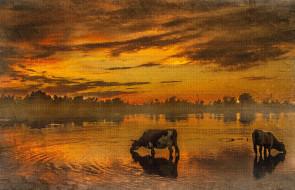 рисованное, животные, коровы, водопой, закат