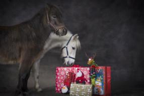 обои для рабочего стола 2048x1365 животные, лошади, пони, подарки, праздник, рождество, новый, год