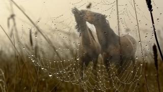 животные, лошади, грива, трава, поле, туман, роса, капли, вода, паутина, макро