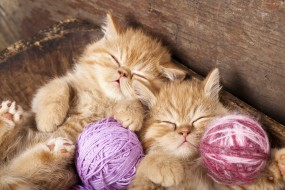 животные, коты, двое, спят, кошки, котята