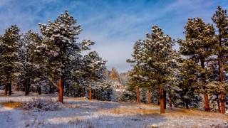 природа, зима, горы, снег, сосны
