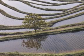 природа, поля, вода, рисовые, чеки, дерево, takaten