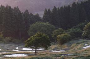 обои для рабочего стола 2048x1365 природа, лес, рисовые, чеки, деревья, склоны, takaten, вода