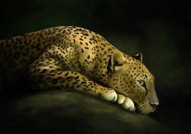 рисованное, животные, леопард, кошка, дикая, арт, хищник, камень