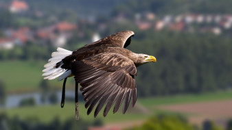 обои для рабочего стола 1920x1080 животные, птицы - хищники, полет, птица, крылья, орел