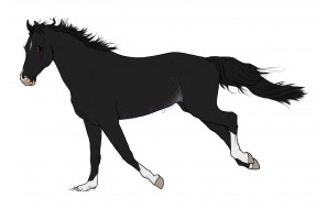 лошадь, взгляд