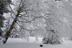 обои для рабочего стола 2074x1383 природа, зима, лес, деревья, снег, иней