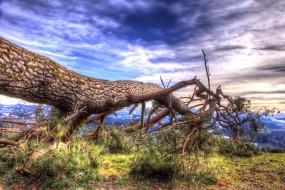 обои для рабочего стола 2048x1367 природа, деревья, тучи, сосна