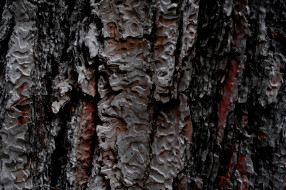 разное, текстуры, фон, текстура, дерево, кора