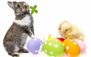 ��������, ������ ������, easter, ����, �������, ������, �����, spring, bunny