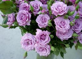 цветы, розы, бутоны, сиреневые, букет