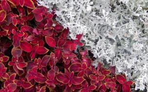 цветы, разные вместе, растения, клумба