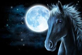 звезды, луна, морда, конь, лошадь