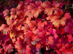обои для рабочего стола 2048x1536 природа, листья, красные, осень, калина