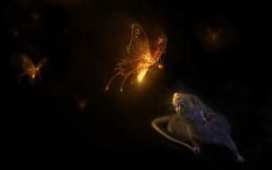 рисованное, животные, свет, сияние, бабочки, крыса, черный, фон