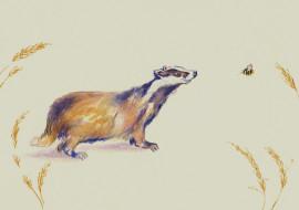 рисованное, животные, акварель, мордашка, пчёлка, барсук